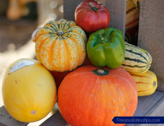 pumpkins-tutti-frutti