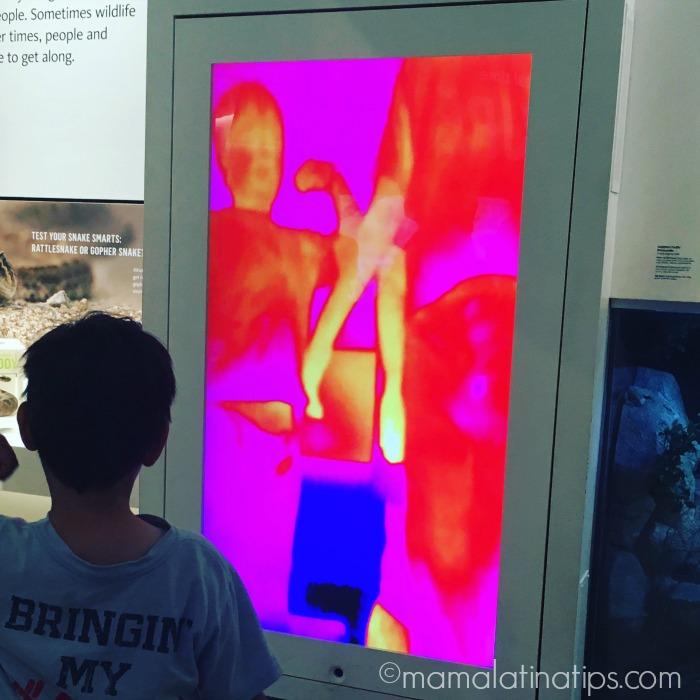 Natural History Museum - mamalatinatips.com